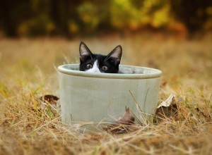 Cat In The Pot – choose the best image