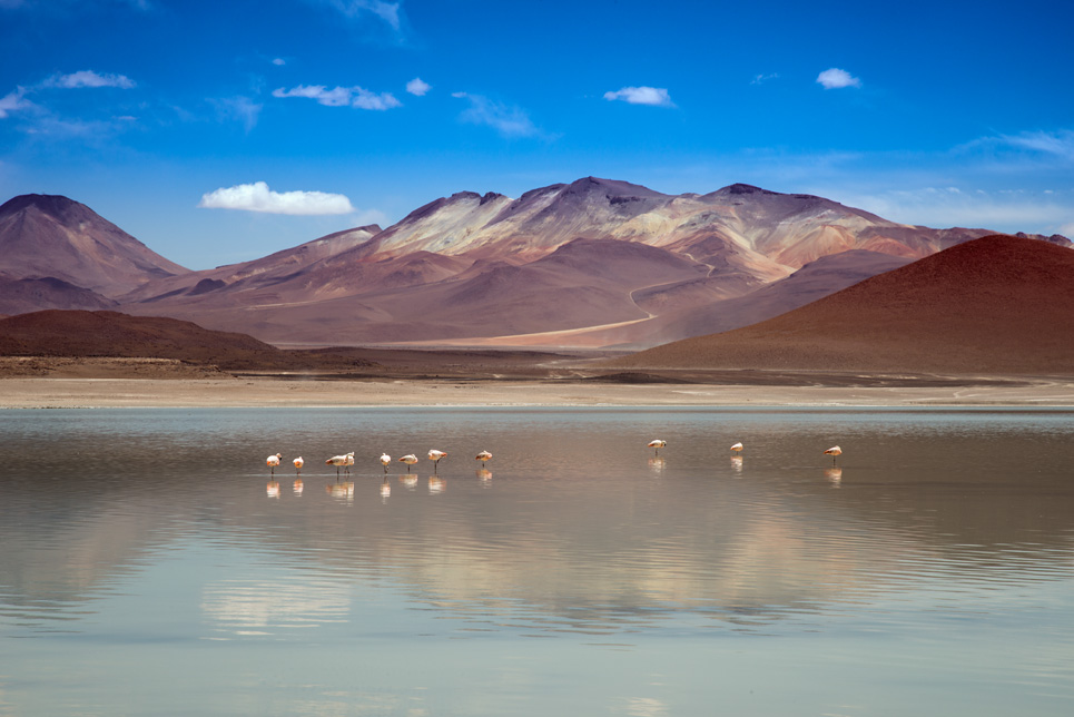 Laguna Blanca, Bolivia, James Flamingo